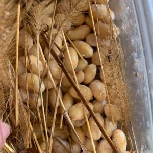 自家製の納豆